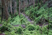 Mount-Sutro-Forest-Hike-Dec-2014-1