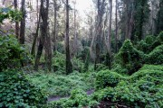 Mount-Sutro-Forest-Hike-Dec-2014-2