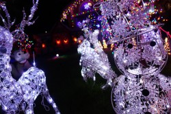 treeside-court-christmas-lights-2014-10