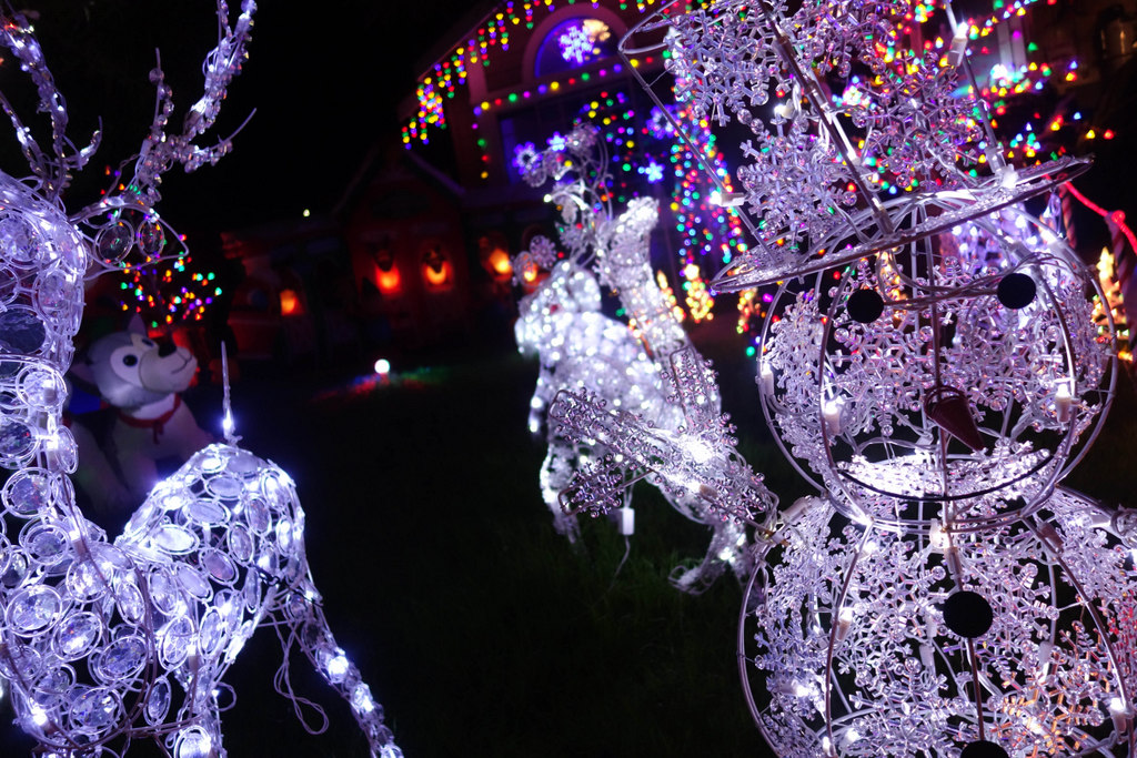 In Pictures : Festive Lights At Treeside Court