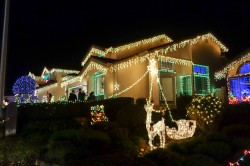 treeside-court-christmas-lights-2014-1