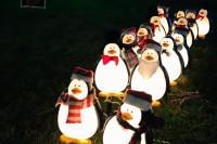 treeside-court-christmas-lights-2015-24
