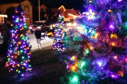 treeside-court-christmas-lights-2015-3-cover