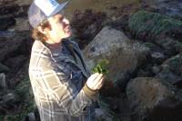 Kirk-Lombard-Sea-Forager-sea-lettuce