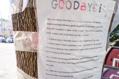 Morus-Alba-Tree-San-Francisco-Message